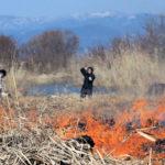 炎に揺らぐ湖岸の春 写真映え、ヨシ「火入れ」 : 京都新聞